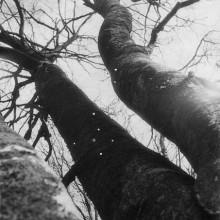 arbres_3