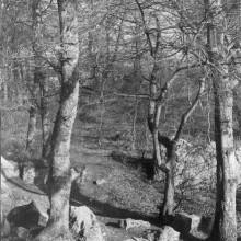 arbres_4